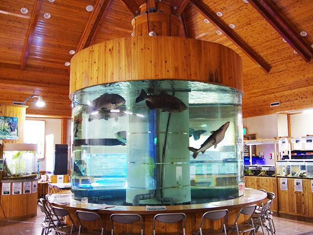 出来的山淡水鱼水族馆